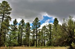 Centro bianco della natura della montagna, Pinetop Lakeside, Arizona, Stati Uniti fotografia stock