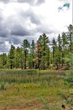 Centro branco da natureza da montanha, Pinetop Lakeside, o Arizona, Estados Unidos foto de stock