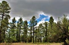 Centro branco da natureza da montanha, Pinetop Lakeside, o Arizona, Estados Unidos Fotografia de Stock