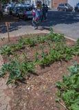 Centro da cidade que jardina em Joanesburgo, África do Sul foto de stock royalty free