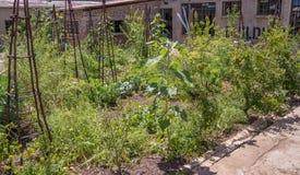 Centro da cidade que jardina em Joanesburgo, África do Sul imagens de stock