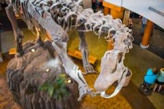 Centro da descoberta de Jurassic Park em estúdios universais imagem de stock royalty free