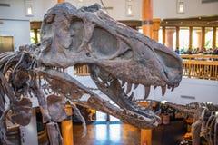 Centro da descoberta de Jurassic Park em estúdios universais foto de stock