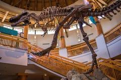 Centro da descoberta de Jurassic Park em estúdios universais imagem de stock