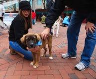 Centro de ciudad de Reston del día de la adopción del animal doméstico VA Fotografía de archivo