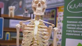 Centro de esqueleto humano da exposição do modelo da escola video estoque
