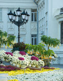 centro de flores Fotografía de archivo