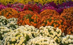 centro de flores Foto de archivo libre de regalías