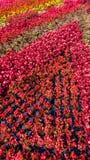 centro de flores fotografía de archivo libre de regalías