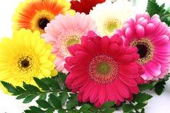 Centro de flores del Gerbera Imagen de archivo libre de regalías