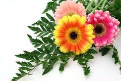 Centro de flores del Gerbera Imagenes de archivo