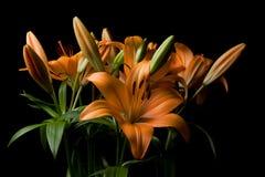 Centro de flores del lirio de tigre Foto de archivo libre de regalías