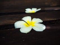 Centro de flores, flor del Plumeria en el viejo tablero de madera Fotos de archivo