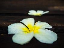 Centro de flores, flor del Plumeria en el viejo tablero de madera Imagen de archivo libre de regalías