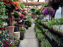 Centro de jardín: hierbas y cestas colgantes Imagenes de archivo