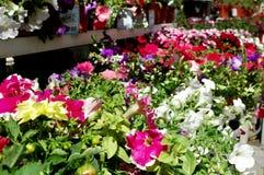 Centro de jardim Imagens de Stock Royalty Free