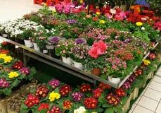 Centro de jardim Fotos de Stock Royalty Free