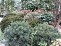 Centro de jardim com seleção de plantas de berçário Variedade de arbustos sempre-verdes imagem de stock