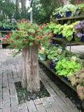 Centro de jardinería Fotos de archivo libres de regalías