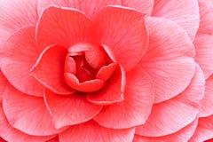 Centro de la flor Fotos de archivo