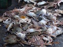 Centro de pesquisa dos peixes Imagem de Stock Royalty Free