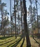 Centro de reconstrucción en bosque del pino Fotos de archivo