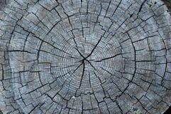 Centro de un árbol viejo Fotografía de archivo