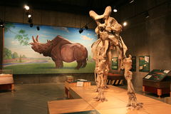 Centro del descubrimiento de T.Rex imagenes de archivo