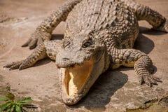 Centro dello stagno del coccodrillo del coccodrillo di Chongqing Immagini Stock Libere da Diritti