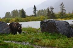 Centro 2 di conservazione della fauna selvatica dell'Alaska Fotografia Stock