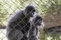 Centro di salvataggio per i primati fotografia stock