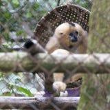 Centro di salvataggio per i primati fotografia stock libera da diritti