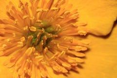 Centro giallo del fiore Immagini Stock