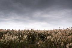 Centro turístico de la fauna de la naturaleza con el campo de lámina imagenes de archivo
