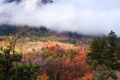 Centro turístico de montaña de Sundance Colores hermosos de la caída del árbol foto de archivo libre de regalías