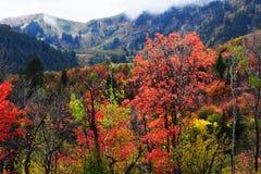 Centro turístico de montaña de Sundance Colores hermosos de la caída del árbol imagen de archivo libre de regalías