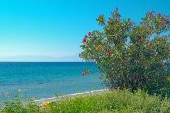 Centro turístico de verano de la península de Halkidiki, Grecia Imagen de archivo libre de regalías