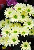 Centro verde de la flor Fotos de archivo