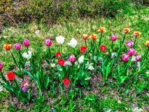 Centros de flores fotografía de archivo libre de regalías