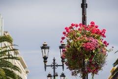 Centros de flores que cuelgan en los postes de la iluminación, San Jose, California imagen de archivo libre de regalías