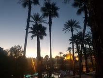 Centros turísticos de las palmas Imagen de archivo libre de regalías