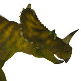 Centrosaurus Dinosaur Head Stock Photography