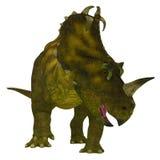 Centrosaurus Dinosaur Neck Frills. Centrosaurus is a herbivorous Ceratopsian dinosaur that lived in Canada in the Cretaceous Period stock illustration
