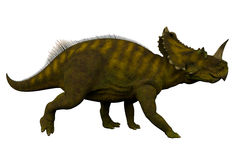 Centrosaurus Side Profile. Centrosaurus was a herbivorous ceratopsian dinosaur that lived in Canada during the Cretaceous Period Royalty Free Stock Photos