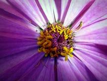 Centrowani kwiaty Zdjęcie Stock