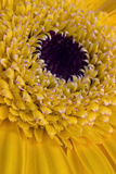 Centrum żółty kwiat Obraz Royalty Free
