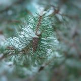centrum kolory składać się z kontrasta chłodno krawędzi ramy lodu niską wzorów śniegu tekstury zima zdjęcia royalty free