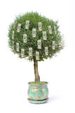 Cents arbres du dollar Photo libre de droits