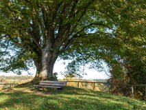 Centuries-old tree Royalty Free Stock Images