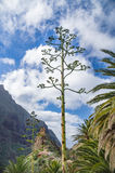Century plant against Masca village and mountains Stock Photos